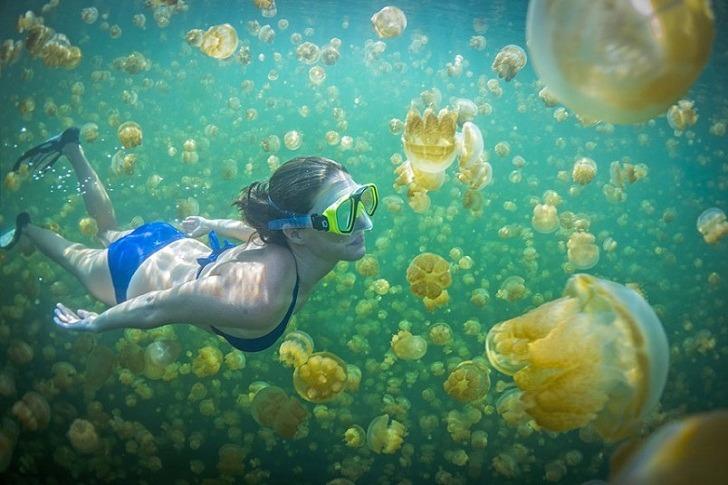 Ubur-Ubur Pulau Kakaban